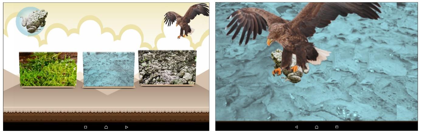 Imagen que contiene animal, ave rapaz, pájaro, interior  Descripción generada automáticamente