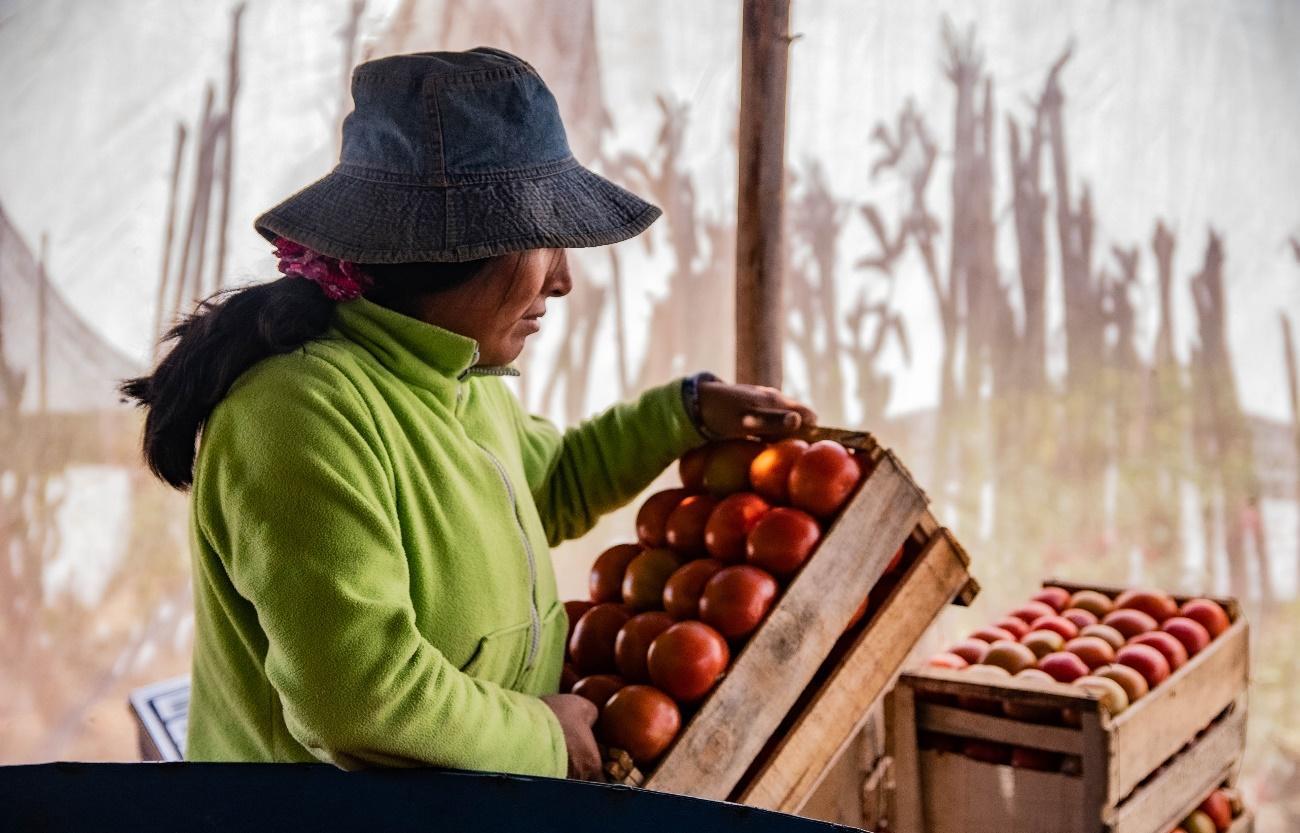 Imagen que contiene fruta, comida, persona, exterior  Descripción generada automáticamente